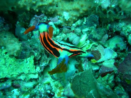 Indopacific Divers,Insel Bunaken,Sulawesi,Indonesien