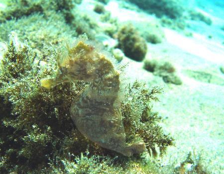 Lanzarote Ocean Divers,Kanarische Inseln,Spanien
