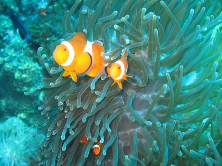 Sun Divers,Alona Beach,Philippinen