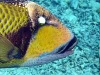 Embudu,Süd Male Atoll,Diverland,Malediven