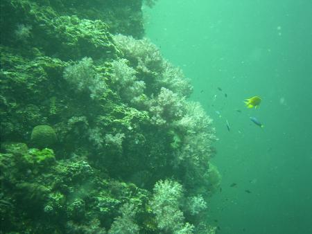 Pimalai Divers,Ko Lanta,Andamanensee,Thailand