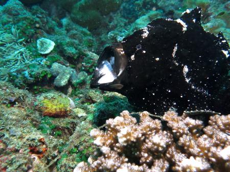 Wellbeach Dive Shop,Philippinen
