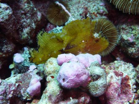 Moorea,BoraBora,Rangiroa,Fakarava,Französisch-Polynesien