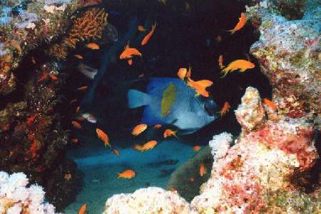 South Red Sea Susanna,Hurghada,Ägypten
