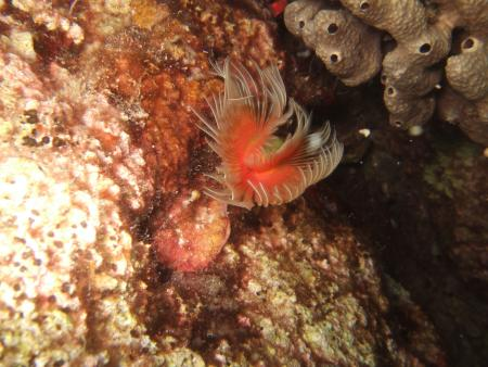 Atlantis Dive Club,Alanya,Türkei