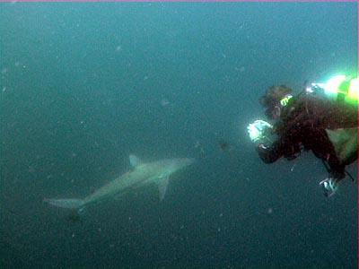 African Dive Adventures,Margate,Südafrika