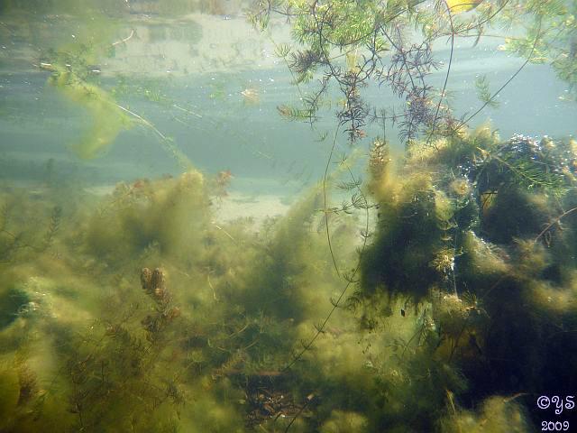 wenig Fisch, dafür ganz schön herbstlich, Großer Glienicker See,Berlin,Deutschland