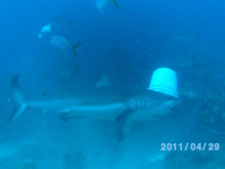 Tobri Divers,Dixon Cove Roatan,Honduras