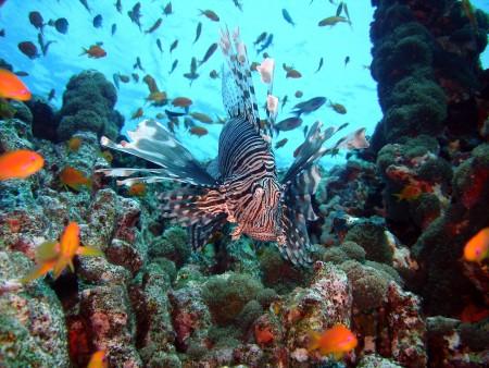 Carpe Vita,Malediven