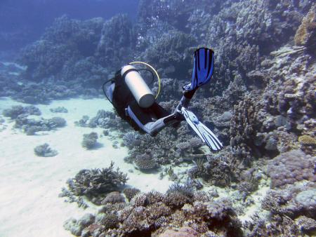diving.DE el Flamenco,El Quseir bis Port Ghalib,Ägypten