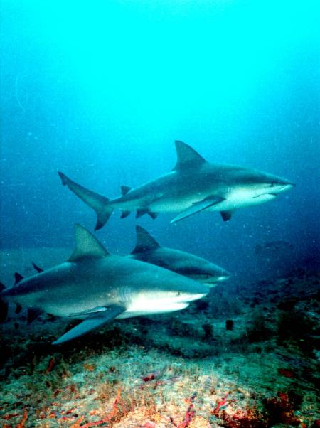 Shark`s Friends,Santa Lucia,Kuba