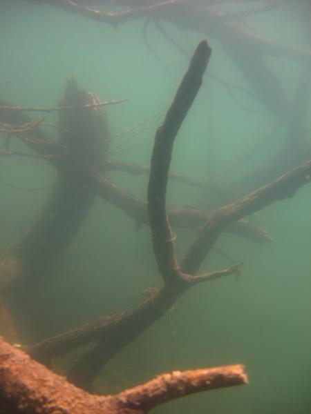 Loheider See  Duisburg Baerl,Nordrhein-Westfalen,Deutschland