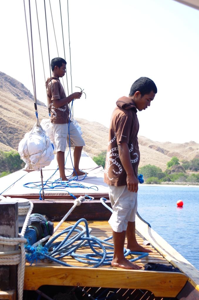 Bootsjungen, Wunderpus, Indonesien, Allgemein