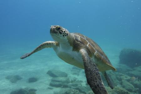 Fun-Dive-Tenerife/Teneriffa,Kanarische Inseln,Spanien