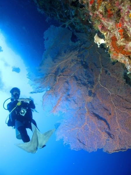 Prince John Dive Resort,Marantale/Parigi,Indonesien