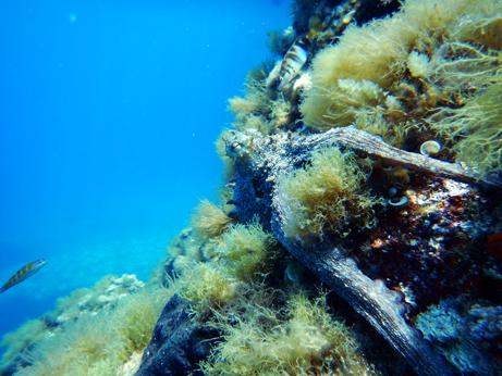 East Coast Divers Mallorca, Porto Colom - Octopus, East Coast Divers; tauchen auf Mallorca; Mallorca, East Coast Divers, Porto Colom, Mallorca, Spanien, Balearen