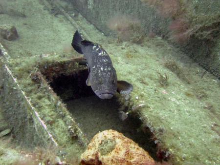 ABC Dive,Paphos,Zypern