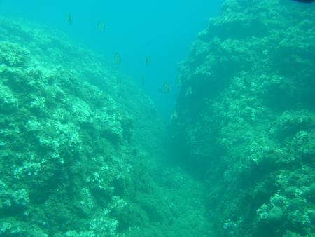 Universo Acqua Diving,Lacona (Elba),Italien