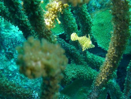Bonaire,Niederländische Antillen