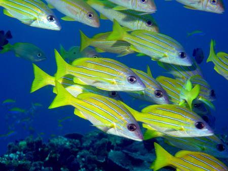 Coral Divers,Sodwana Bay,Südafrika
