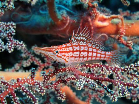 Asia Divers,Sabang,Puerto Galera,Philippinen