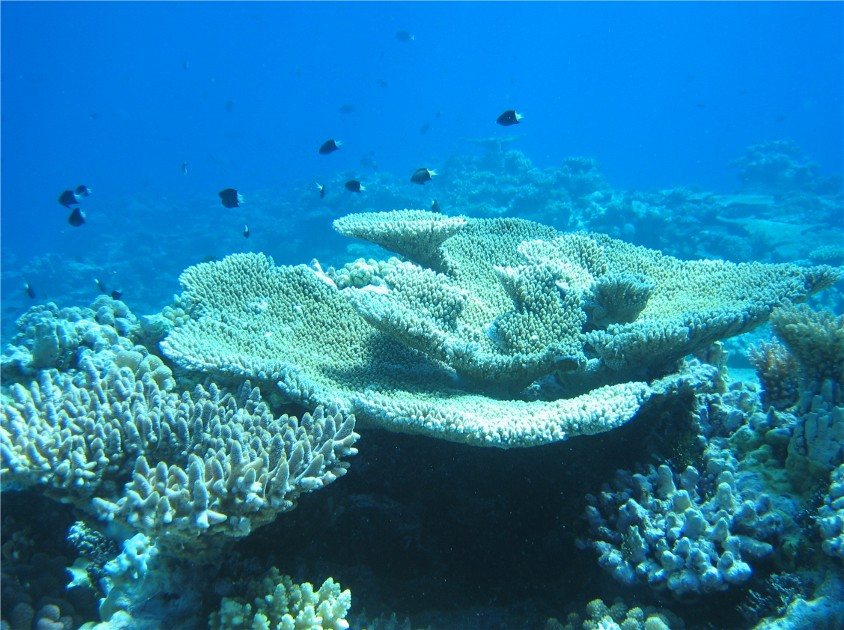 Great Barrier Reef / Coral Sea, Great Barrier Reef / Coral Sea,Australien