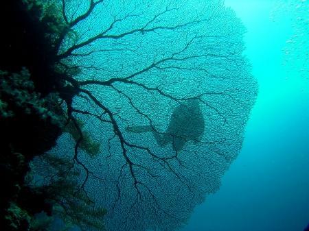 Ocean Hunter I,Palau