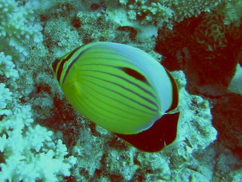 Hurghada - Erg Bajad, Erg Bajad,Hurghada,Ägypten