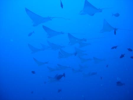 Catfish,Malediven