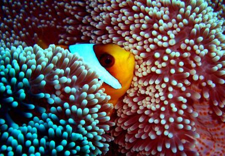 St. John´s  Reef - Gota Kebir,Ägypten