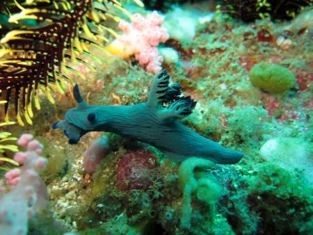 Dolphinbay-Divers,Puerto Galera,Philippinen