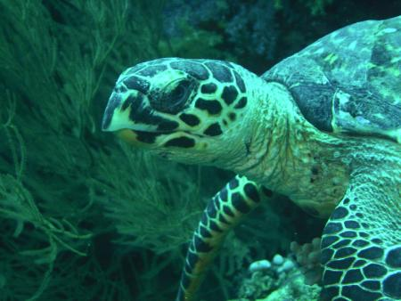 Sub Aqua München,Malediven