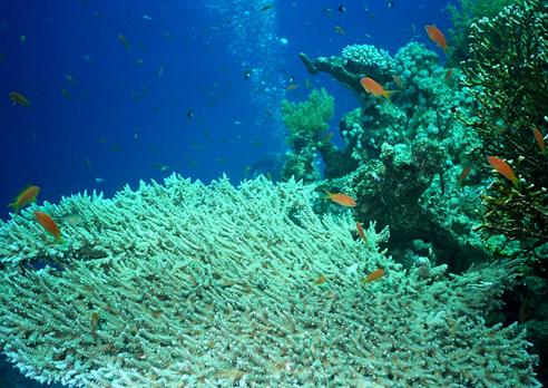 Sharm el Sheikh - Ras Umm Sid, Ras Umm Sid (Sharm El Sheikh),Ägypten