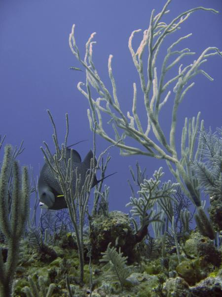 Viva Diving,Grand Bahama,Bahamas
