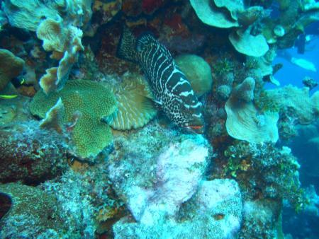 Playa Kalki (Watamula),Curaçao,Niederländische Antillen