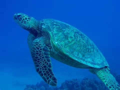 ABT Divers, Hilton Hotel, Salalah, Oman
