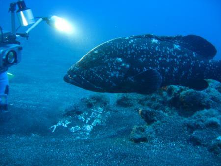Fan Diving,El Hierro,Kanarische Inseln,Spanien