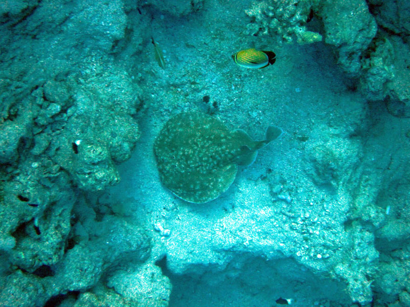 Amphoras: Walhaie, Manta`s uvm., Amphoras Lokal - Sharm el Sheikh,Ägypten