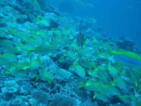 Makunudu,Dive Ocean,Malediven