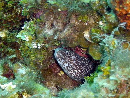 Starfish Resort Trelawny,Falmouth,Jamaika