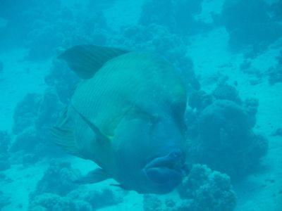 Orca Dive Club Wadi Lahmy Azur / bei Hamata,Marsa Alam und südlich,Ägypten