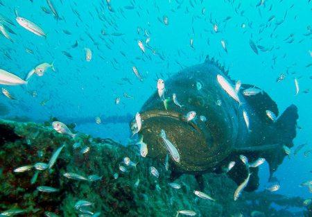 Rainbow Reef,Key Largo,Florida,USA