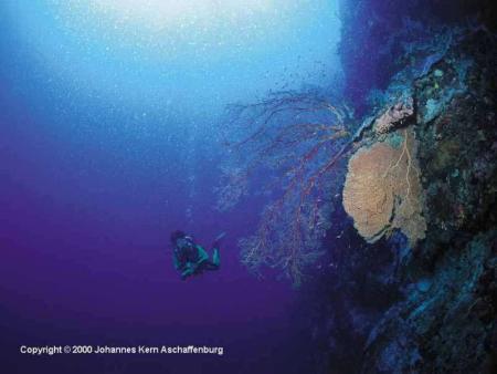 Tubbataha Reefs National Park,Philippinen