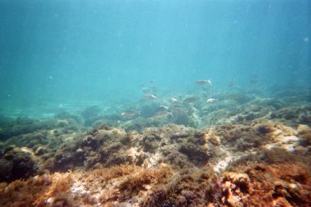NAUTISUB Diving Center,San Vito Lo Capo,Trapani (Sizilien),Italien