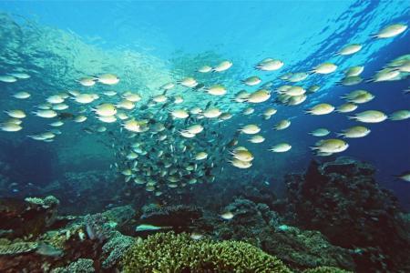 Intodeep Tauch- & Abenteuerreisen,52355 Düren,Indonesien