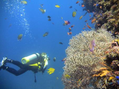 Relaxing Divers,Bali,Indonesien