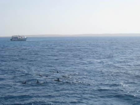 Funny Divers,Hurghada,Ägypten