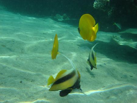 Brayka Bay Resort - Marsa Alam,Ägypten