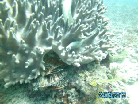 Karafuu Diving (Wimbi Diving),Zanzibar,Tansania