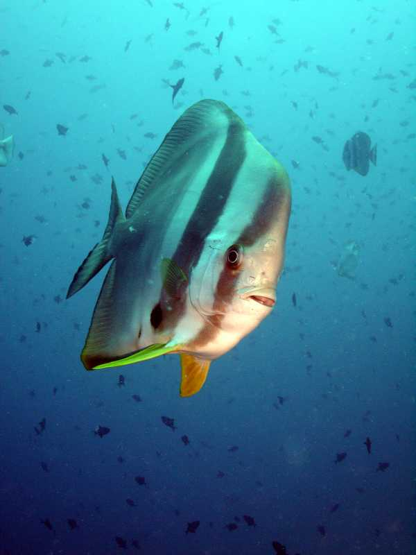 Felidhoo-Atoll, Felidhoo-Atoll,Malediven